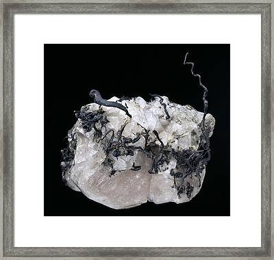 Native Silver Framed Print by Science Photo Library