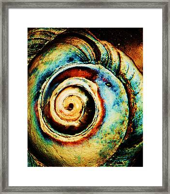 Native Spiral Framed Print by Daniele Smith