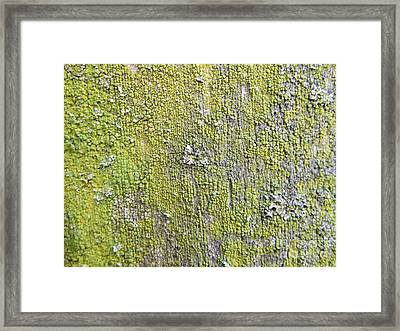 Natural Abstract 1 Framed Print