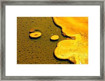 Natural Abstract Framed Print