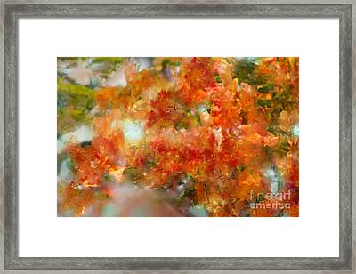 Natural Abstractions #12 The Orange Tree Framed Print