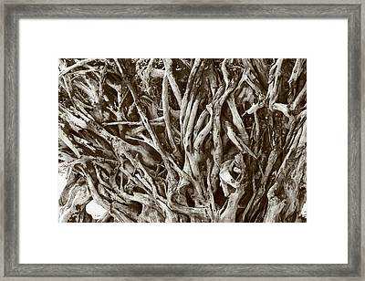 Natural Artwork Framed Print