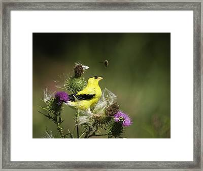 Natural Attraction Framed Print