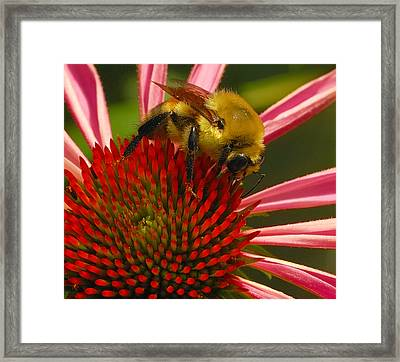 Natural Attractions  Framed Print by Steven Milner