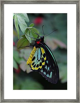 Natural Awakenings Framed Print by Juergen Roth
