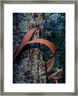 Framed Print featuring the photograph Natural Bands 1 by Evelyn Tambour