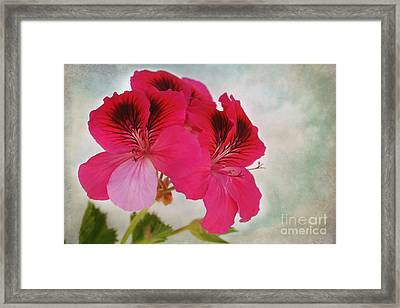 Natural Beauty Framed Print by Claudia Ellis