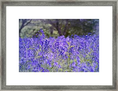 Natural Beauty Framed Print by Jevgenija Kokoreva