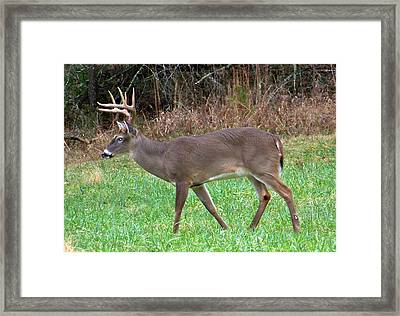 Natural Beauty Framed Print by Judy Grindle Shook