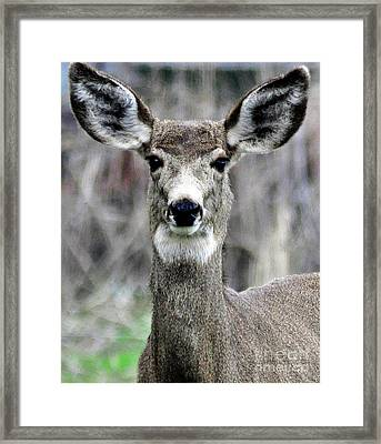 Framed Print featuring the photograph Natural Beauty by Juls Adams