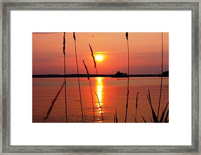 Natural Beauty Framed Print by Pat Purdy