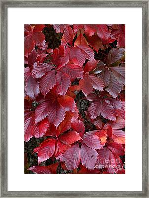 Framed Print featuring the photograph Natural Beauty by Randy Bodkins