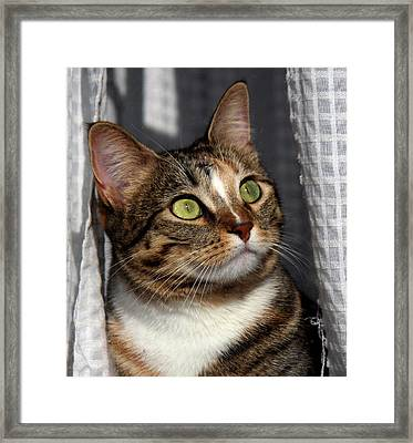 Framed Print featuring the photograph Natural Beauty by Silke Brubaker