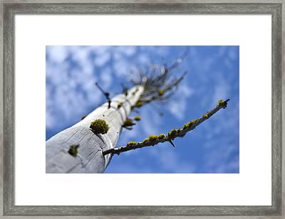 Natural Bonsai Framed Print by Rich Rauenzahn