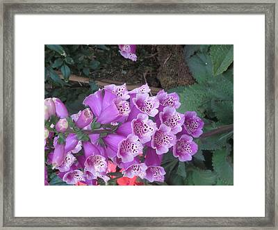 Framed Print featuring the photograph Natural Bouquet Bunch Of Spiritul Purple Flowers by Navin Joshi