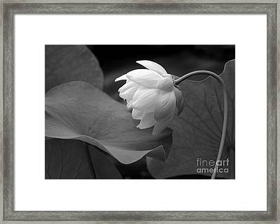Natural Curve Framed Print by Sabrina L Ryan