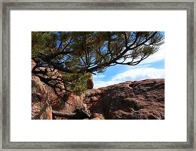 Natural Delights Framed Print by Mike Flynn