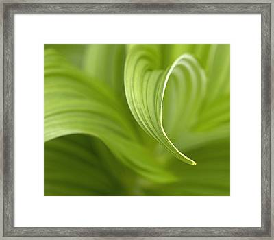 Natural Green Curves Framed Print by Claudio Bacinello