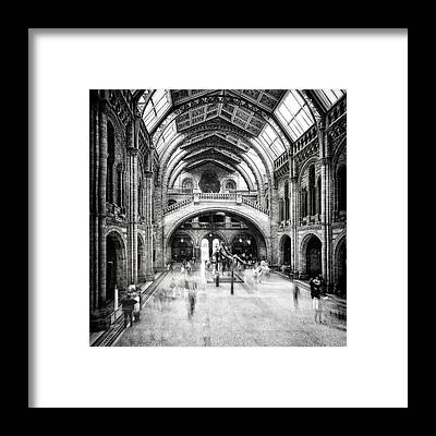 Natural History Museum Framed Prints