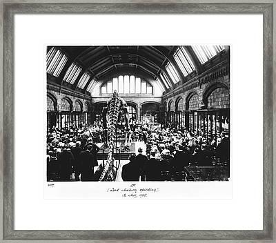 Natural History Museum's Diplodocus, 1905 Framed Print by Natural History Museum, London