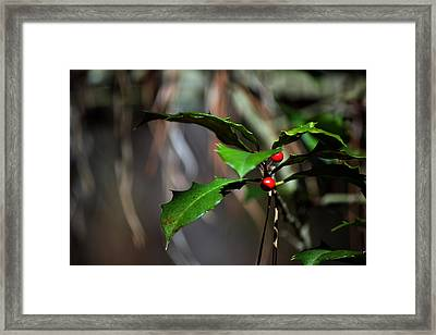 Framed Print featuring the photograph Natural Holly Decor by Bill Swartwout