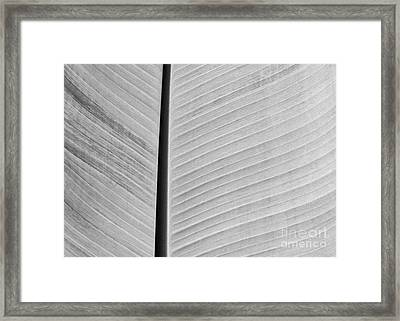 Natural Lines Framed Print by Sabrina L Ryan