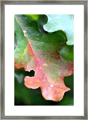 Natural Oak Leaf Abstract Framed Print by Maria Urso