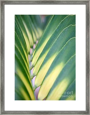 Natural Op Art Framed Print by Sabrina L Ryan