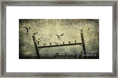 Natural Order Framed Print by Andrew Paranavitana