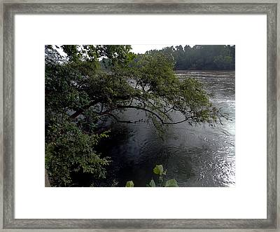 Natural Protection Framed Print by Skip Willits
