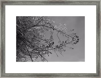 Natural Reflection Framed Print by Karol Livote