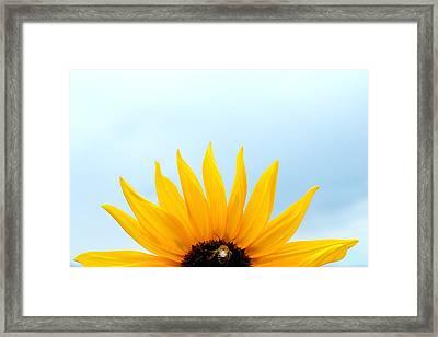 Natural Sunrise - Sunflower And Bee Framed Print by Steven Milner