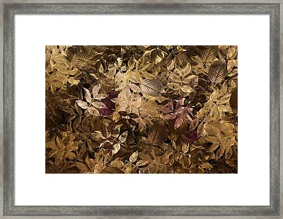 Naturaleaves - Gla02f Framed Print by Variance Collections