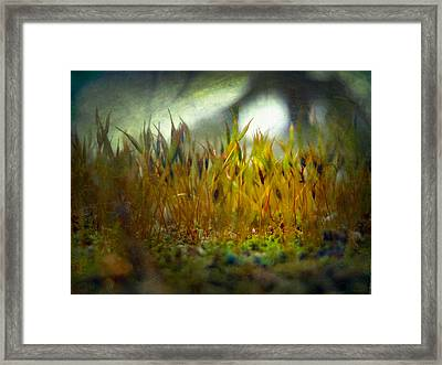 Framed Print featuring the photograph Nature #10 by Alfredo Gonzalez