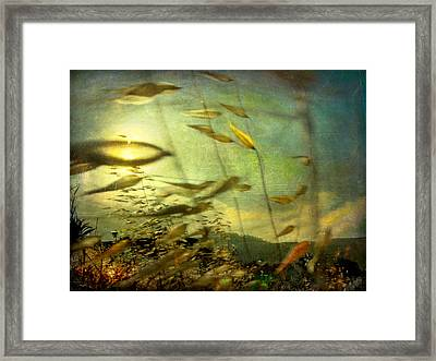 Framed Print featuring the photograph Nature #12. Strong Wind by Alfredo Gonzalez