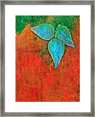 Nature Abstract 11 Framed Print