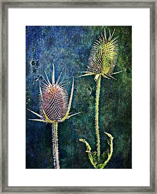 Nature Abstract 12 Framed Print