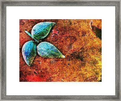 Nature Abstract 17 Framed Print