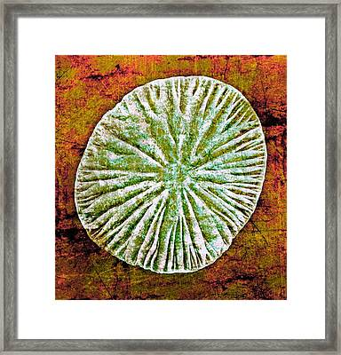 Framed Print featuring the digital art Nature Abstract 5 by Maria Huntley