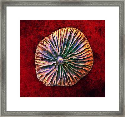 Framed Print featuring the digital art Nature Abstract 7 by Maria Huntley