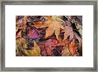 Nature  Framed Print by Andrew Raby