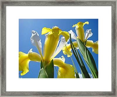 Nature Art Prints Yellow White Irises Flowers Framed Print
