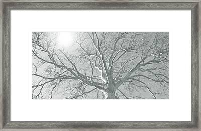 nature - art - Winter Sun  Framed Print by Ann Powell