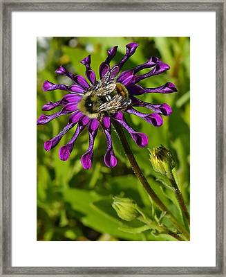 Nature At Work Framed Print