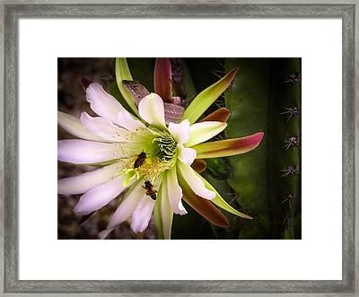 Nature Before Sunrise Framed Print