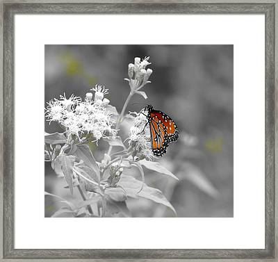 Nature Blessing Framed Print by David  Norman