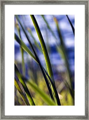 Nature Bokeh Framed Print by Karim SAARI