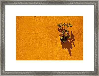 Nature Don't Stop II Framed Print