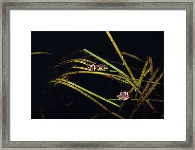 Nature Floats Framed Print by Karol Livote