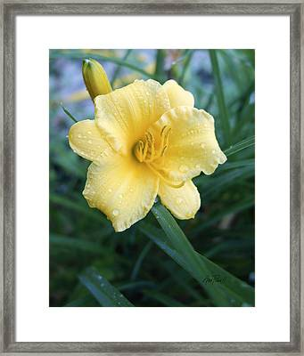 nature - flower- Yellow Lily After The Rain Framed Print by Ann Powell
